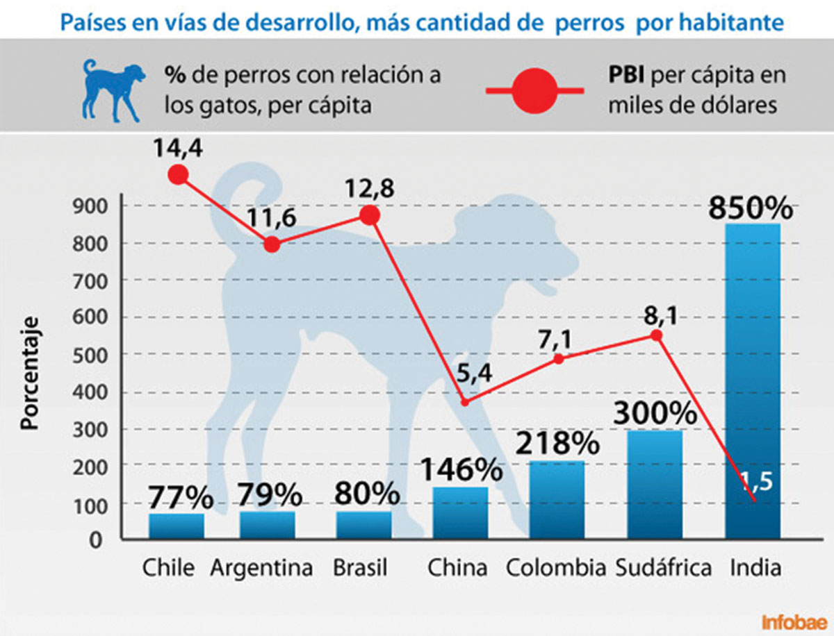 Grafico Big Cat
