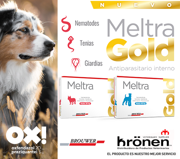 Kronen – MeltraGold Lateral JUN